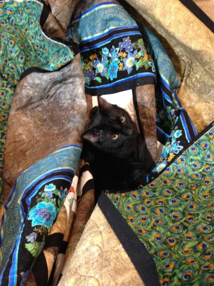 Sammy in the Quilt