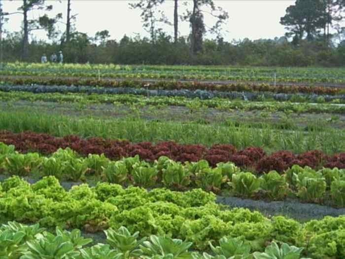 farm_field_5